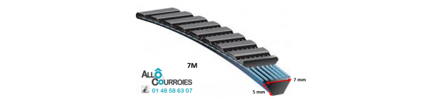 Courroie Type Banflex Polyflex - 7 M (dim: 5x7 mm) | Allocourroies.com